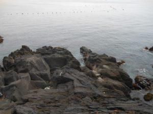 2014年05月05日 真鶴, 二番下, 磯釣り