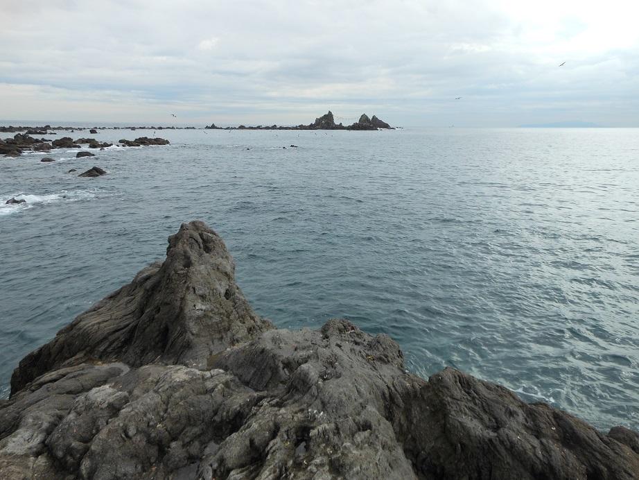 2016年11月28日 真鶴, カワウソ, 磯釣り