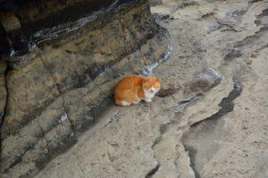 2018年01月29日 猫, 三浦半島, 城ヶ島, 猪子島前, 磯釣り
