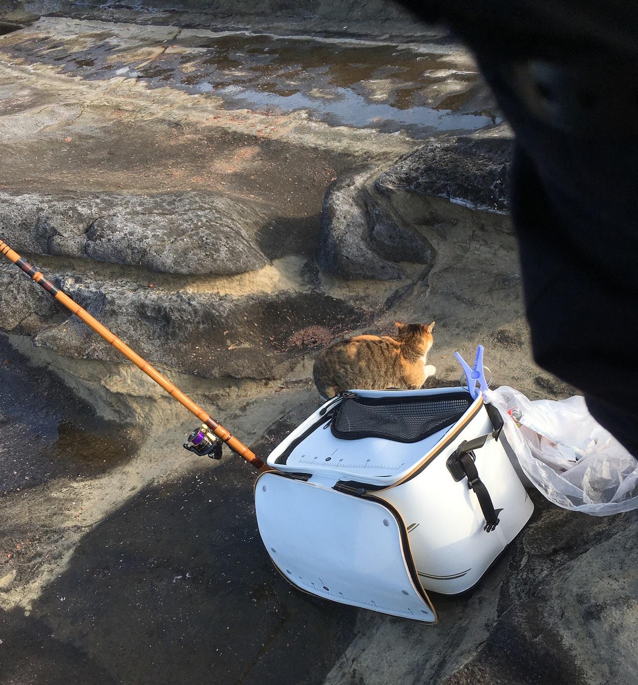 猫, 三浦, 城ヶ島, ヒナダン, 磯釣り