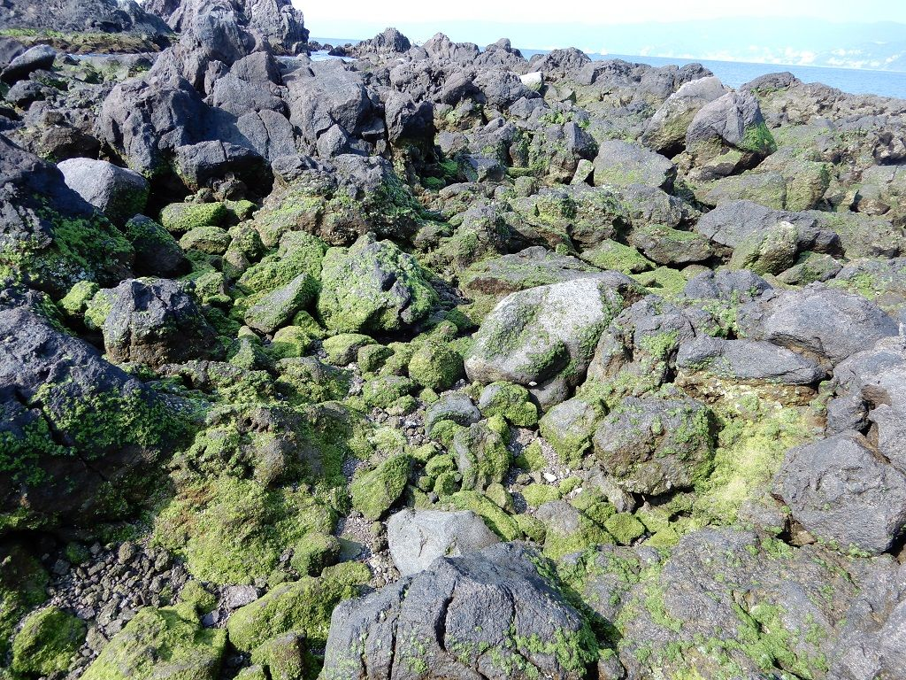 2019年05月04日 岩海苔, 真鶴, 三ツ石, 磯釣り